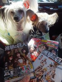 本屋さん→散歩へ - 毎日笑顔♪ 裸犬☆温・真珠・絆愛Ⅱ
