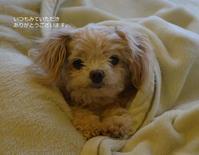 かわいいお菓子たち と ブログ6周年☆ - my story***