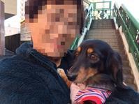 16年12月9日 凛幸保育園(笑) - 旅行犬 さくら 桃子 あんず 日記
