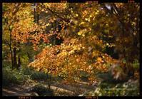 自由散歩@撮影---新宿御苑の巻 - くにちゃん3@撮影散歩