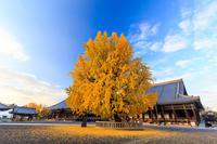 京都の紅葉2016 本願寺の黄金色 - 花景色-K.W.C. PhotoBlog