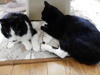黒白の天使、ナースのらくろ - 愛犬家の猫日記