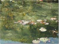 名もなき池 - 見る...撮る...感じるままに。
