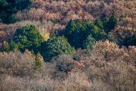 木枯らし吹く巾着田 - デジカメ写真集