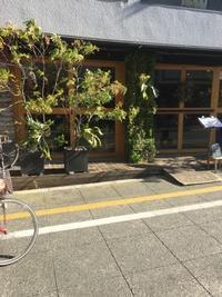 根性ある壁面緑化、松蔭神社前のお店と神保町 - アーバン・ガーデン・ウォッチング