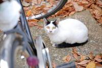 雑司が谷 鬼子母神堂近辺の猫 vol.1 - 猫と、猫と、猫。
