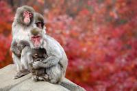 母と子 - 動物園のど!