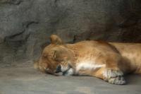 お腹がふくれれば - 動物園のど!