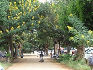 ミンガラーバー(こんにちわ)ミャンマー⑪暑い国の花 - 幸せごっこ