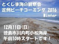 定例ビーチコーミング 明日です! - 『とくしま海の観察会』 公式ブログ