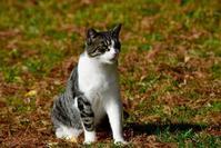 手賀沼の猫さんたち - Buono Buono!