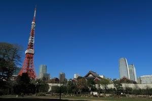 江戸のお庭を撮る⑤ 芝公園 - miyabine's フォト日記~身の周りのきれい・可愛い・面白い~