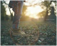 夕暮れ時 - Forest Garden