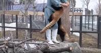 レッサーパンダのぶらんぶらん動画。 - rodolfoの決戦=血栓な日々