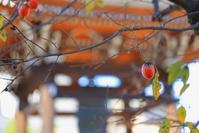 木守り - 「美は観る者の眼の中にある」