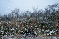 雪 - 源爺の写真館