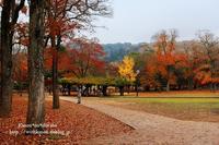 奈良公園ぶらり③ - *花音の調べ*
