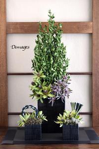 新春和飾り4点セット♪ - Dimages