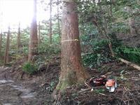 間伐施業その2その3 - 自伐林業 施業日記