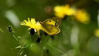 平成28年を振り返って その2 - 紀州里山の蝶たち