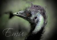 エミュー:Emu - 動物園の住人たち写真展