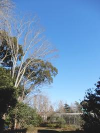 冬の晴れた日・・・ - 【出逢いの花々】
