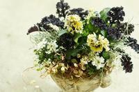 寄せ植えと入荷のお花のご紹介 - mon dimanche blog