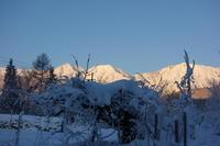 白馬は雪の日々:肉豆腐と韓国キムチ - bluecheese in Hakuba & NZ:白馬とNZでの暮らし