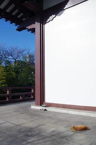 増上寺・猫 - 鳥会えず猫生活
