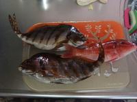 タカノハダイ2匹、オジサン(小)1匹、サンコ4匹、ゴンズイ多数。 - ベトナムで水泳を教えたい