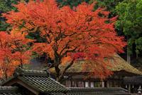 京都の紅葉2016 摩氣神社の紅葉 - 花景色-K.W.C. PhotoBlog