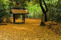 京都の紅葉2016 山崎聖天の秋 - 花景色-K.W.C. PhotoBlog