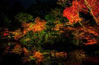 京都の紅葉2016 等持院ライトアップ - 花景色-K.W.C. PhotoBlog