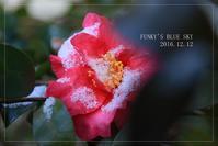コロンコロンへといざなう香り~ - FUNKY'S BLUE SKY