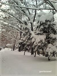 大雪で一気に真冬の景色に・・・ - はあと・ドキドキ・らいふ