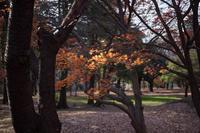 なごり紅葉と冬空 - 彩りの軌跡