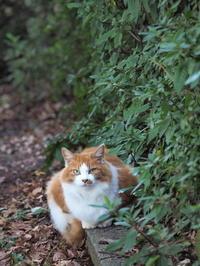 深山公園猫 - Y*s ROOM