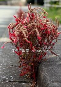 逞しき花 - 花々の記憶  happy momo