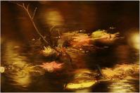 秋は終わってしまったけれど。。。*Ⅶ - It's only photo