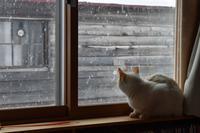 雪の窓猫 - オムイと森羅万象