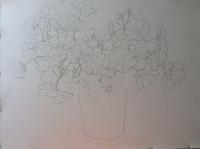 コスモス水彩画/制作過程 その1 - ポッと出っスけど杉山ひとみ/水彩画ブログ