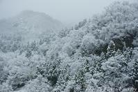 富山散歩~県西部275~雪の五箇山合掌集落-1- - Tomの一人旅~気のむくまま、足のむくまま~