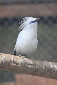 12月15日(木) 鳥インフルエンザ - ほのぼの動物写真日記