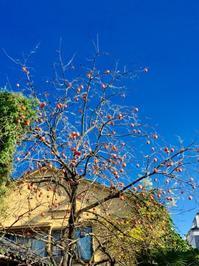 秋の風景とアール・デコ - handvaerker ~365 days of Nantucket Basket~