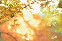 紅葉とクモの巣 - GreenLife