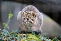 猫が丸くなるとき - 動物園へ行こう