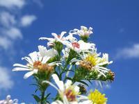 『河川敷の植物たち・・・・・♪』 - 自然風の自然風だより