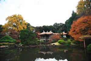 新宿御苑の紅葉5 - 写真とパピオン大好き3