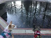 アプリ更新ができなくなりました - 琉球犬mix白トゥラーのピカ
