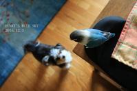 B.B & Chipo* ほらっ、飛んで来た~♪ ^^ - FUNKY'S BLUE SKY